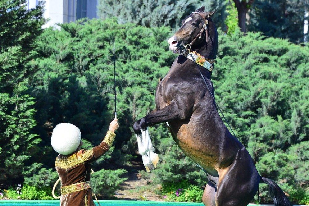 Президент Туркменистана вручил $50 тыс. конной группе «Галкыныш»