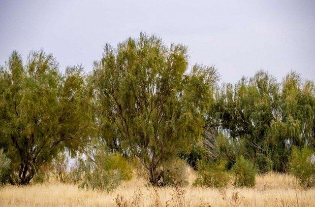 Туркменистан продолжит работы по сохранению биоразнообразия Каракумов
