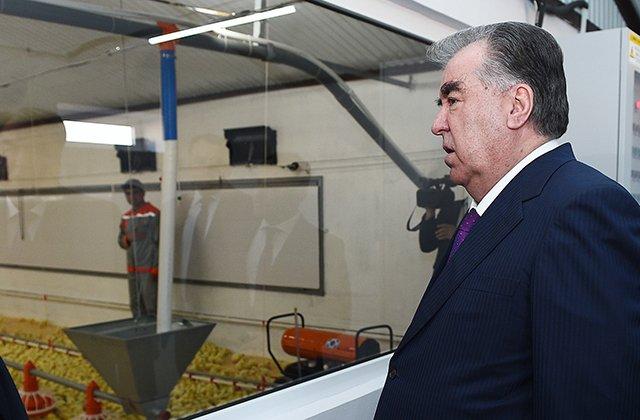 Новая таджикская птицефабрика будет поставлять на рынки 1000 тонн мяса в год