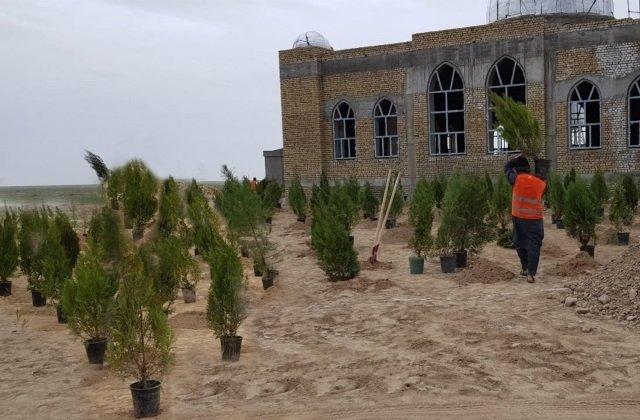 Туркменистан провёл озеленительную акцию в Афганистане
