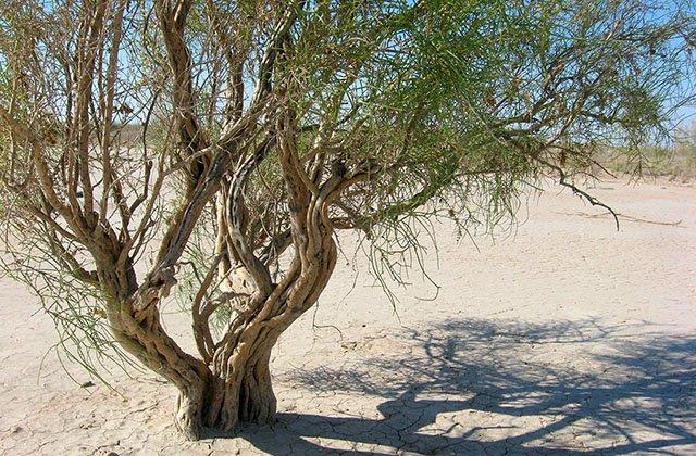 Туркменистан расширит борьбу с опустыниванием