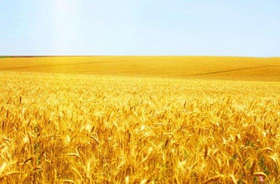 Россия приостановила экспорт зерновых культур