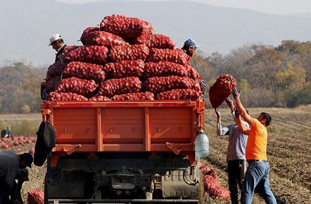 Туркменские агропроизводители завершат сдачу плодоовощной продукции