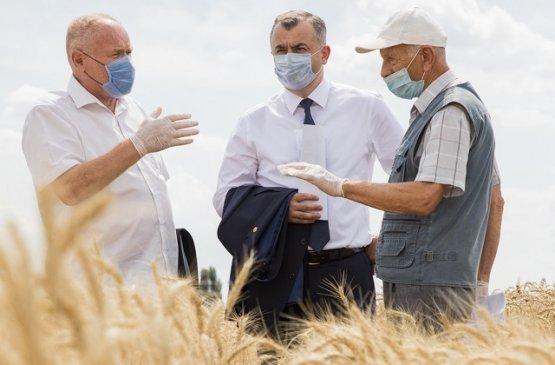 В Молдове намерены восстановить семеноводческую отрасль