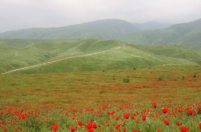 В Туркменистане обсудили климатические изменения и пандемию коронавируса
