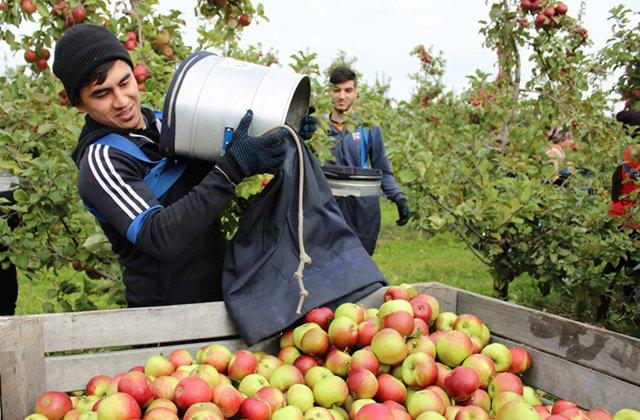 В Беларуси студентов из Туркменистана направили на сбор яблок