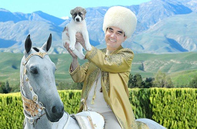 Российские кинологи включили туркменского алабая в Топ-3 по сторожевым качествам
