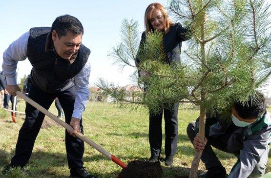 В знак поддержки женщин на выборах президент Киргизии посадил деревья в парке