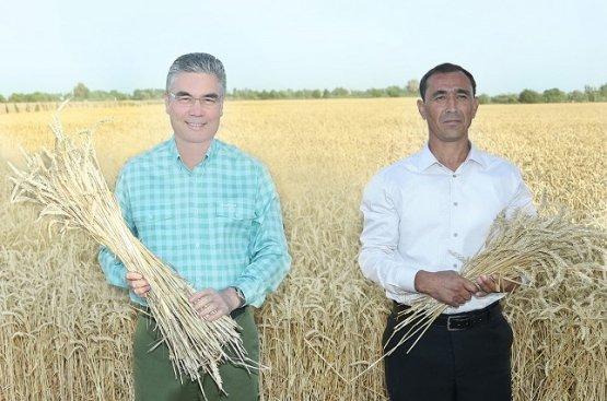 Бердымухамедов распорядился о своевременном и безопасном сборе зерна