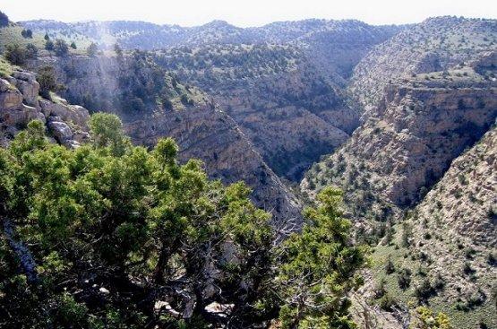Президент утвердил лесную Нацпрограмму на 2021-2025 годы