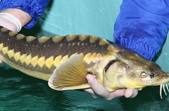 В Туркменистане увеличился рост производства морепродуктов